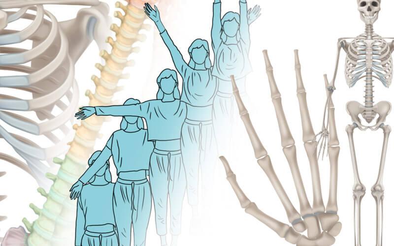 Anatomía del movimiento: articulaciones y huesos