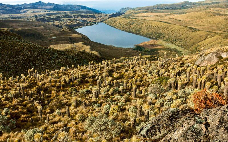 En la región andina de Colombia se configuran algunos de los mosaicos de paisajes y de ecosistemas tropicales de montaña más ricos y diversos del mundo. Image: Banco de Occidente