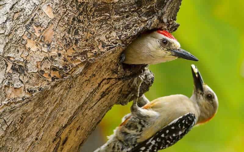 Los Andes colombianos poseen la mayor riqueza de especies de fauna Image: Banco de Occidente
