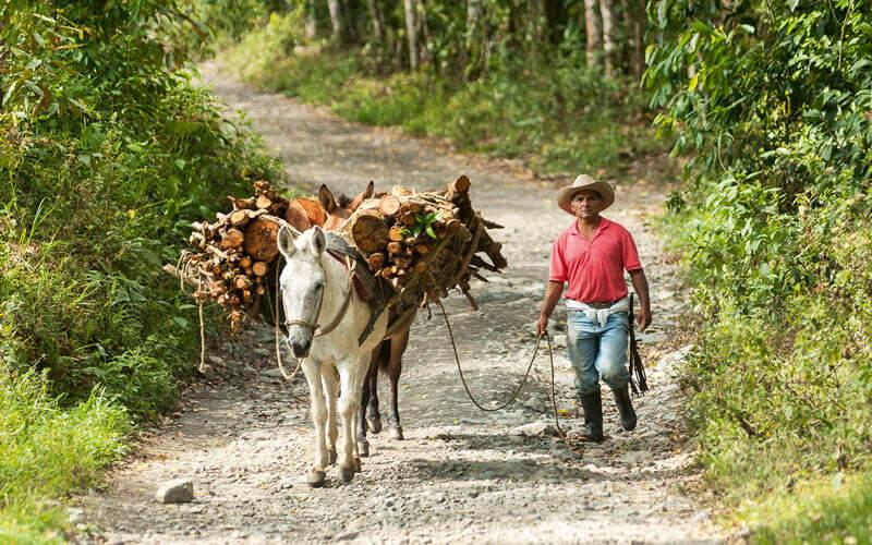 La región andina de Colombia, que ocupa tan solo el 27% de su territorio, es la que alberga una mayor cantidad y diversidad de especies de flora y fauna Image: Banco de Occidente
