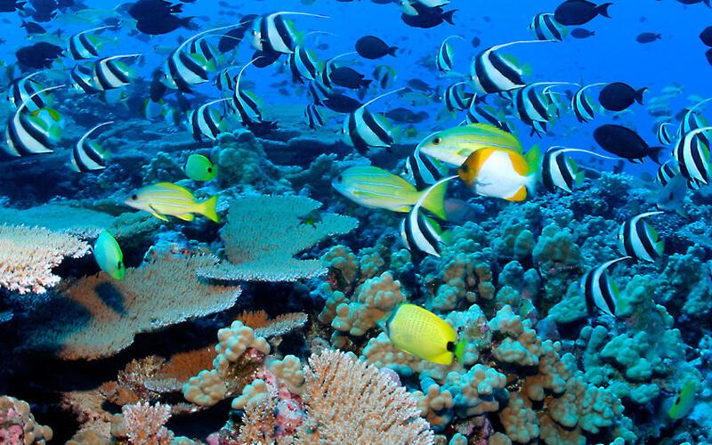 PNUD / Peces y arrecifes de corales en las aguas del archipiélago de las Seychelles.