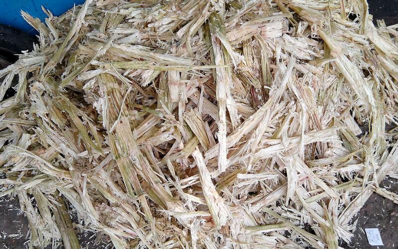 Bagazo de caña de azúcar. Fotografía: Thamizhpparithi Maari en Wikipedia. CC BY-SA 3.0