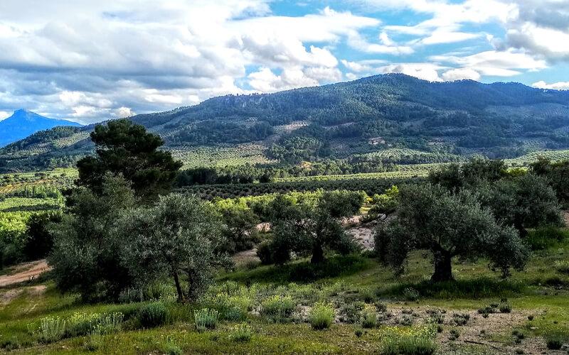 Olivar con cubierta vegetal enclavado en un paisaje complejo. / Fundación Descubre