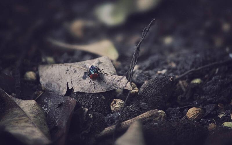 Medio ambiente subterráneo. / Pixabay
