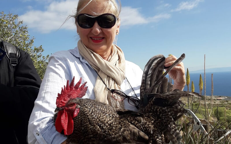 La investigadora Esperanza Camacho en Tenerife con un gallo campero canario. Fundación Descubre