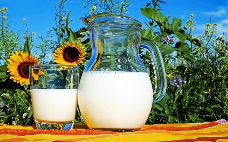 Producción de leche vegetal podría consumir hasta 40% menos de agua utilizada para producir leche de vaca