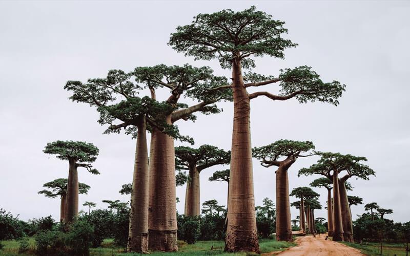 El primer paso para usar árboles para frenar el cambio climático: proteger los árboles que tenemos