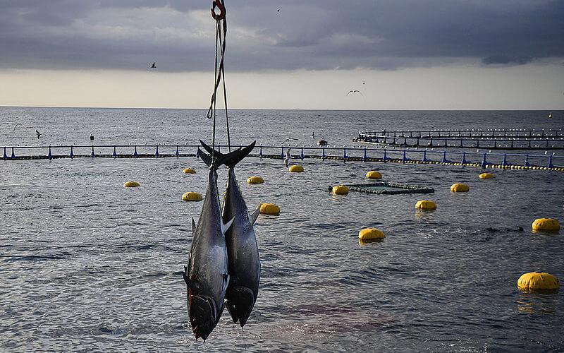 Imagen. / Pau Barrena/AFP
