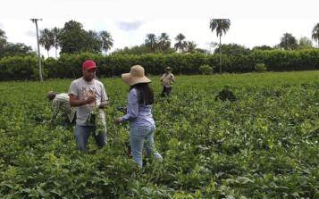 Software calcula cantidad ideal de fertilizantes en cultivos