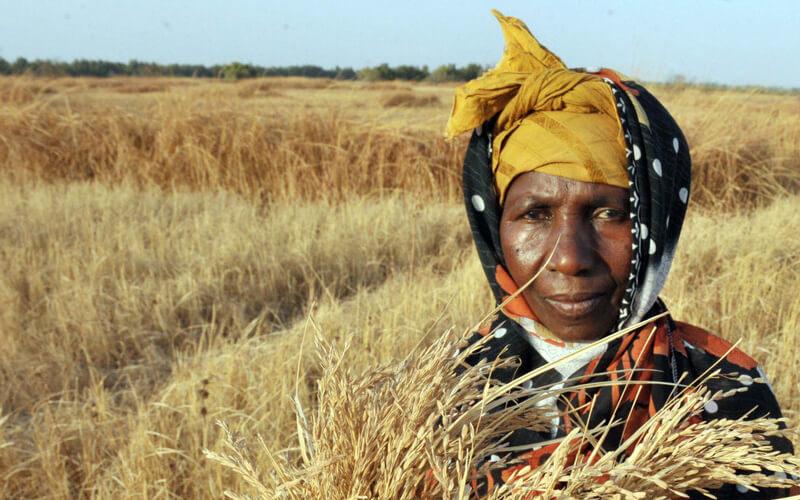 Imagen. /  FAO/Seyllou Diallo