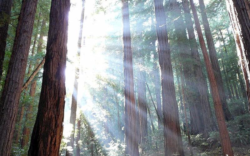 Los bosques de América Latina y el Caribe son claves para la sostenibilidad ambiental y la seguridad alimentaria del planeta