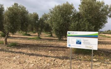 Optimizan la producción agrícola a través del cuidado del suelo
