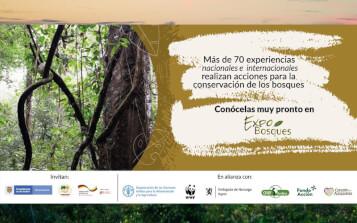 ExpoBosques, una plataforma digital que le apuesta al manejo sostenible de la Amazonia