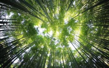Determinan los tres factores principales que gobiernan el comportamiento de los ecosistemas terrestres