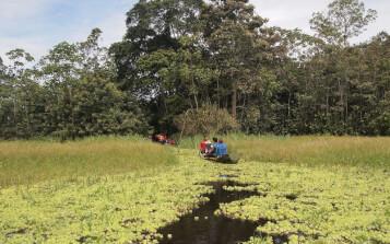 WWF publica recomendaciones para la implementación del Pacto de Leticia en un contexto de recuperación económica verde, justa y resiliente