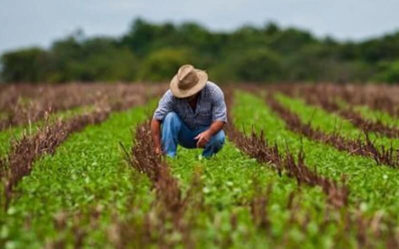 ¿Hay que transformar los sistemas agroalimentarios?